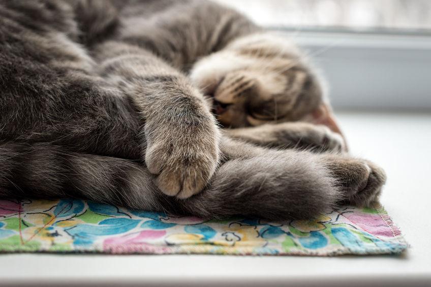 sleeping cat at the upvc double glazed window